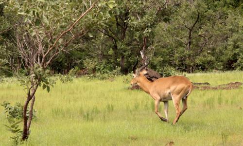 Parc national du Niokola Koba